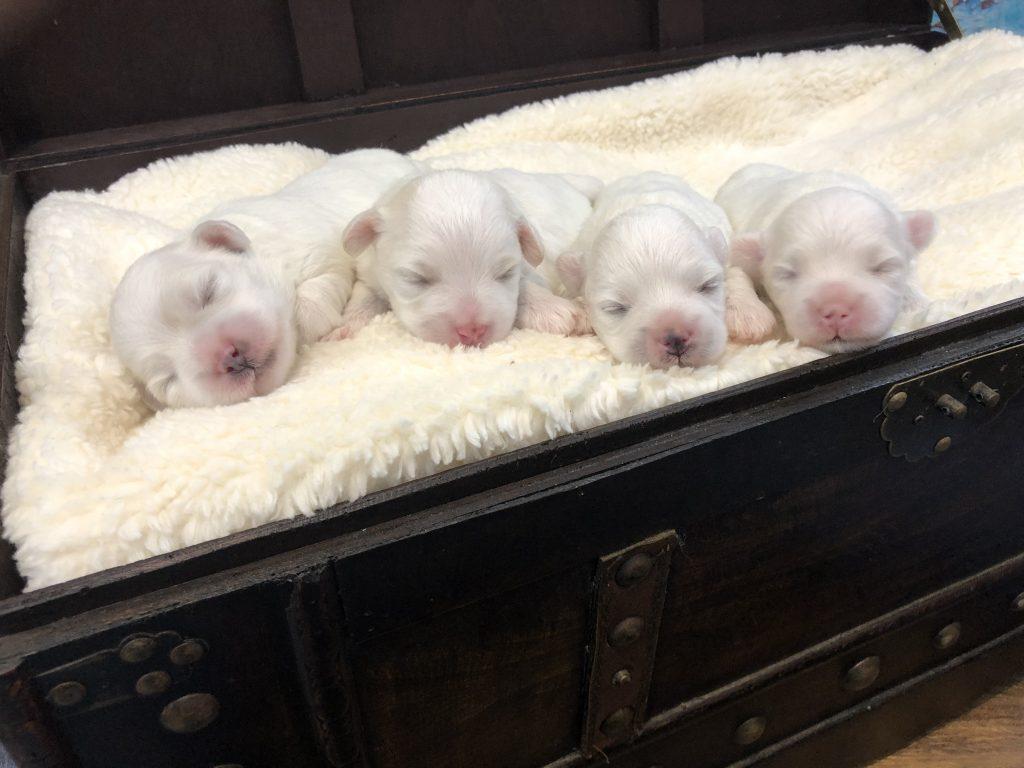puppy's van Tess geboren september 2019